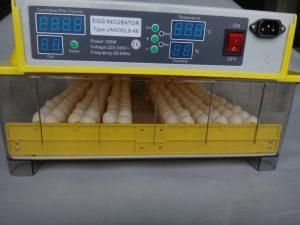 réglages température couveuse automatique